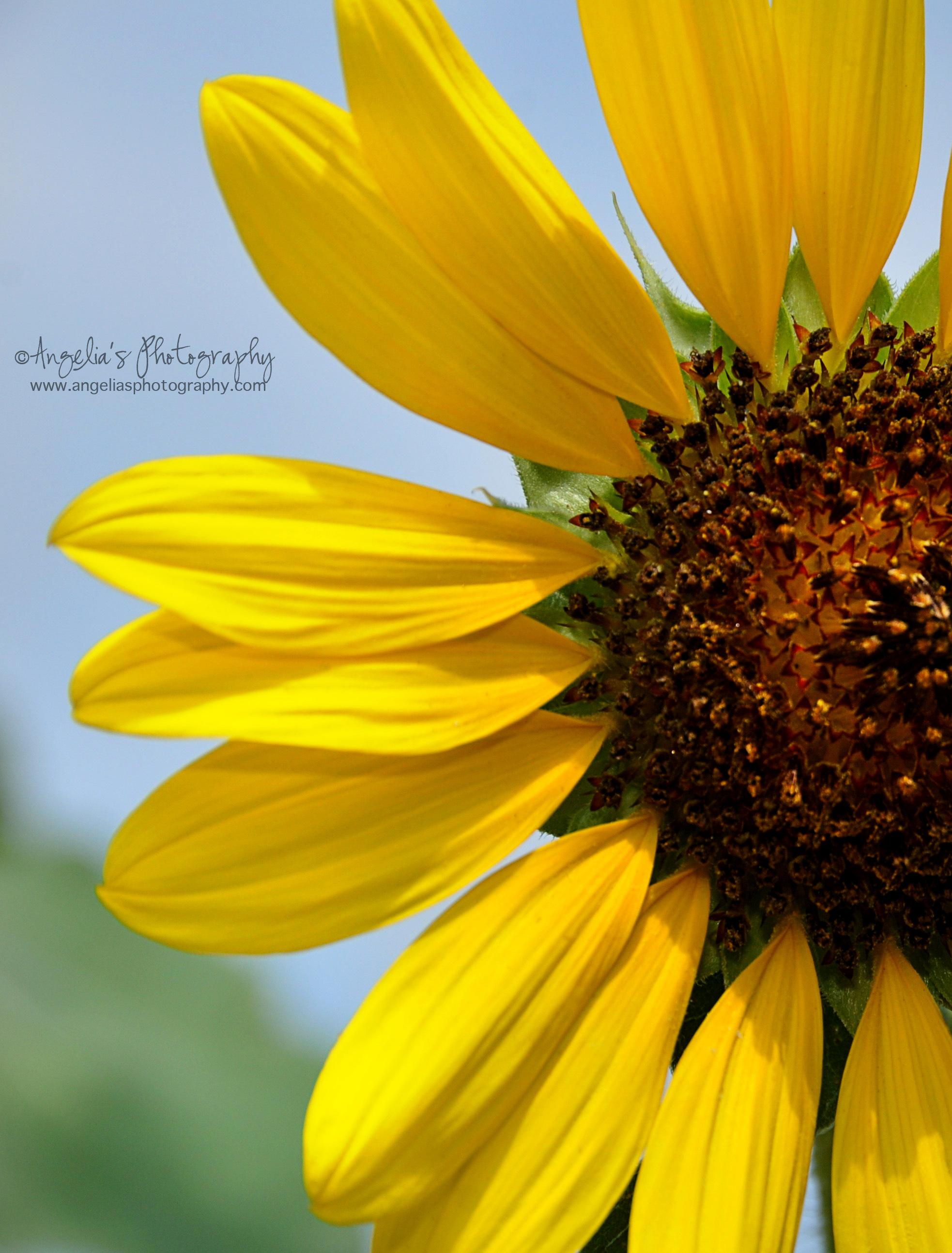 Nature S Sunshine Super Supplemental Review