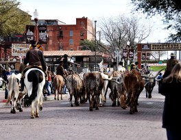 February - A visit to Cowtown (Fort Worth), Texas to see the Longhorn stampede. Such a fun atmosphere