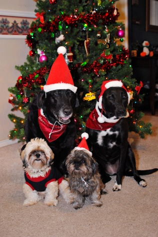 Our four furry festive pets.