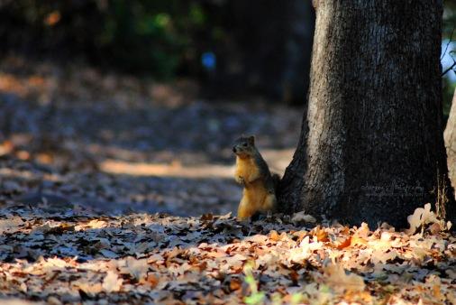 Surprised Squirrel.
