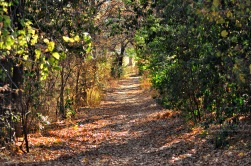 """A trail I """"Fall"""" for."""