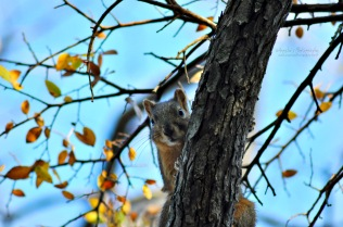 Creeper squirrel.