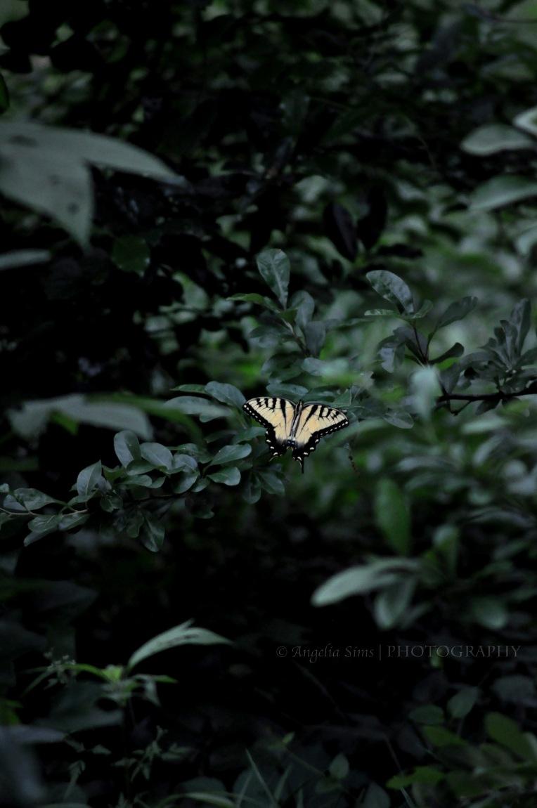 © Angelia's Photography