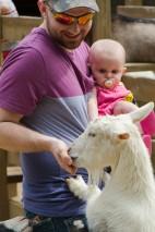 Feeding the goats.