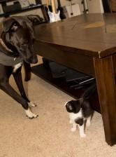 Anna pup and Maya kitty.