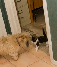 Maya kitty wonders what Fred (the dog) is.
