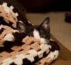 Maya lounging in a blankie.