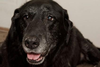 Salem turns 12!