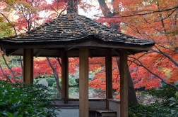 My last day of recovery, I went to the Japanese gardens.