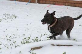 My Anna dog runs through the snow/ice.