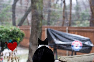 Maya kitty sees her first snow. She batted at the window like. WHAT? What is that??
