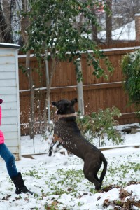 Anna the Snow ball catcher. Who needs a Frisbee?